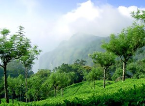Coonoor Hill Station Tour